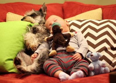 Schnauzer-sleeping-kid